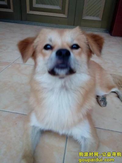 寻狗启示,狗狗丢了一天,在上海市嘉定区方泰镇泰顺路小区附近丢失,好心人发现必重谢,它是一只非常可爱的宠物狗狗,希望它早日回家,不要变成流浪狗。