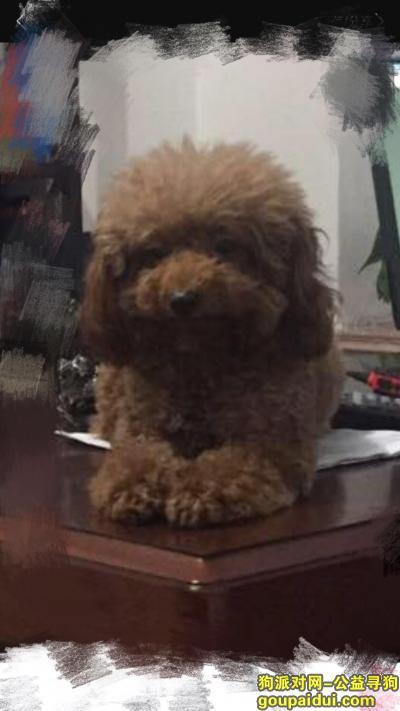 寻狗启示,青岛即墨市德馨大厦体育场酬谢五千元寻找泰迪,它是一只非常可爱的宠物狗狗,希望它早日回家,不要变成流浪狗。