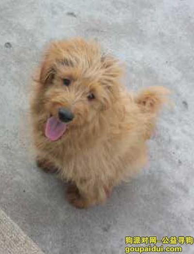 潍坊寻狗主人,棕色 幼犬 长毛 2017年4月新华路 圣荣广场那边的佳乐家附近,它是一只非常可爱的宠物狗狗,希望它早日回家,不要变成流浪狗。