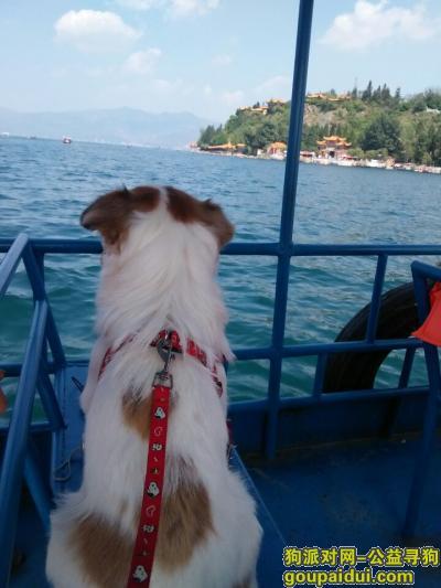 红河寻狗启示,云南建水找狗,望好心人帮忙,它是一只非常可爱的宠物狗狗,希望它早日回家,不要变成流浪狗。