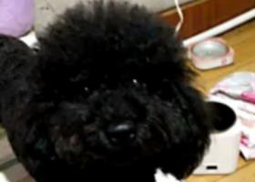 吉林省长春市南关区,东岭南街鹏程肛肠医院附近,狗狗丢了,急死了