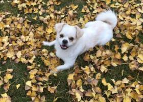 寻狗启示,寻两岁公狗,于2017年4月8号在定远县走失,它是一只非常可爱的宠物狗狗,希望它早日回家,不要变成流浪狗。