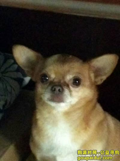 怀化寻狗网,怀化市五溪广场寻狗启示,它是一只非常可爱的宠物狗狗,希望它早日回家,不要变成流浪狗。