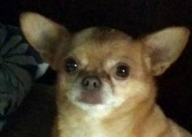寻狗启示,怀化市五溪广场寻狗启示,它是一只非常可爱的宠物狗狗,希望它早日回家,不要变成流浪狗。