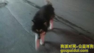 湘潭捡到狗,捡到一阿拉斯加犬寻主人,它是一只非常可爱的宠物狗狗,希望它早日回家,不要变成流浪狗。