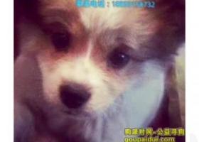 寻狗启示,寻狗启示❤️❤️,它是一只非常可爱的宠物狗狗,希望它早日回家,不要变成流浪狗。
