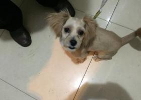 成都大塘坎街附近捡到一只狗
