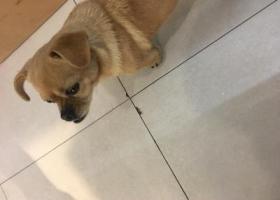 寻狗启示,2017.4.17合肥长江饭店附近捡到一条小狗寻找主人,它是一只非常可爱的宠物狗狗,希望它早日回家,不要变成流浪狗。