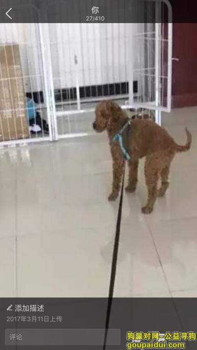 巴中找狗,一岁棕色公没有断尾的泰迪,它是一只非常可爱的宠物狗狗,希望它早日回家,不要变成流浪狗。
