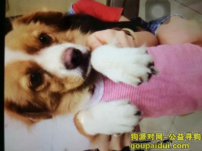 潮州寻狗网,帮忙找找我的狗狗吧!详情见下文,它是一只非常可爱的宠物狗狗,希望它早日回家,不要变成流浪狗。