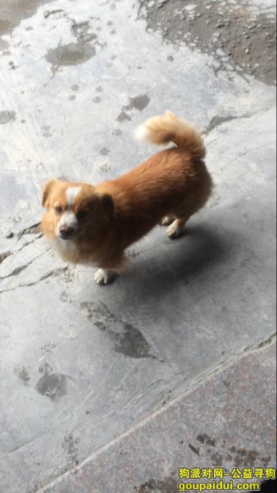 潮州寻狗启示,帮忙找找!谢谢!详情看下文,它是一只非常可爱的宠物狗狗,希望它早日回家,不要变成流浪狗。