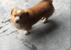 寻狗启示,帮忙找找!谢谢!详情看下文,它是一只非常可爱的宠物狗狗,希望它早日回家,不要变成流浪狗。