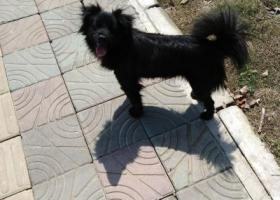 寻狗启示,…,它是一只非常可爱的宠物狗狗,希望它早日回家,不要变成流浪狗。