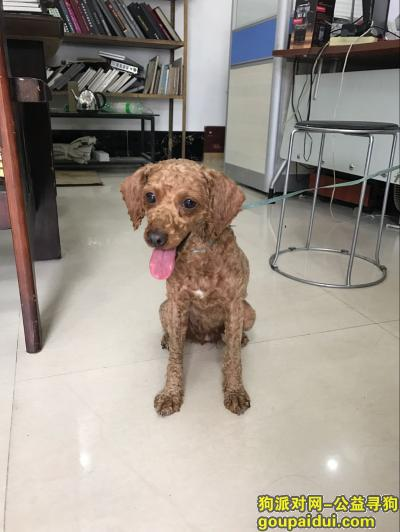 湛江找狗主人,湛江赤坎区双港路附近寻找狗主人,它是一只非常可爱的宠物狗狗,希望它早日回家,不要变成流浪狗。