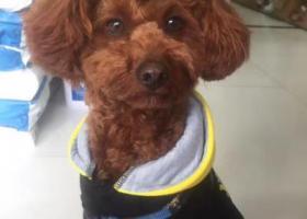 寻狗启示,棠梅小区A区大门口寻狗启示,它是一只非常可爱的宠物狗狗,希望它早日回家,不要变成流浪狗。