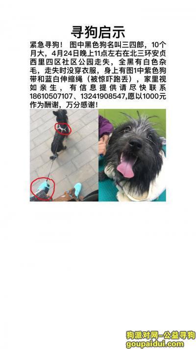 寻狗启示,北京朝阳区北三环安贞社区寻主爱犬,它是一只非常可爱的宠物狗狗,希望它早日回家,不要变成流浪狗。