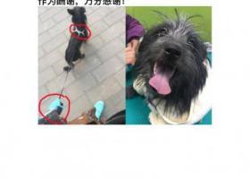 北京朝阳区北三环安贞社区寻主爱犬