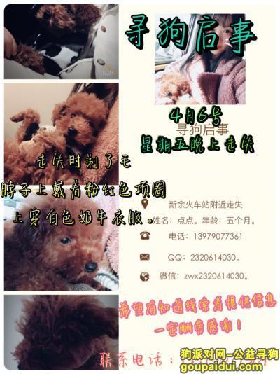 新余寻狗网,寻狗启事 一只母泰迪犬 五个月了,它是一只非常可爱的宠物狗狗,希望它早日回家,不要变成流浪狗。