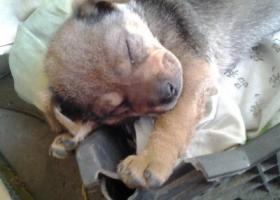 寻狗启示,狗狗于2017年4月27日中午在兰高镇镇沙村走失,它是一只非常可爱的宠物狗狗,希望它早日回家,不要变成流浪狗。