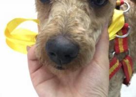 寻狗启示,重庆市大足区龙水重客隆走丢狗狗,它是一只非常可爱的宠物狗狗,希望它早日回家,不要变成流浪狗。