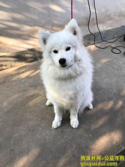 衢州寻狗启示,衢州找狗,4月29日上午在西区走丢,它是一只非常可爱的宠物狗狗,希望它早日回家,不要变成流浪狗。