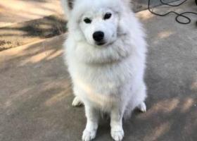 寻狗启示,衢州找狗,4月29日上午在西区走丢,它是一只非常可爱的宠物狗狗,希望它早日回家,不要变成流浪狗。