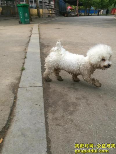 驻马店丢狗,寻狗启示驻马店置地公园里丢失,它是一只非常可爱的宠物狗狗,希望它早日回家,不要变成流浪狗。