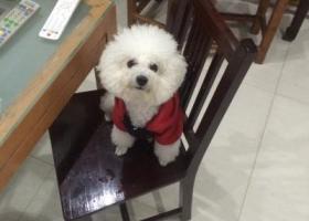 寻狗启示,寻狗启示五一新村附近走丢,它是一只非常可爱的宠物狗狗,希望它早日回家,不要变成流浪狗。