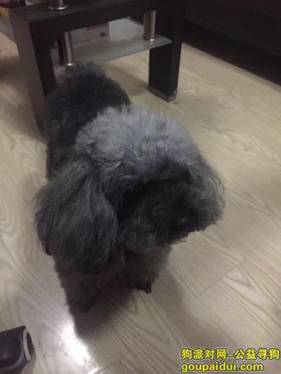 北京丰台大红门锦苑c区下午3点左右走失,它是一只非常可爱的宠物狗狗,希望它早日回家,不要变成流浪狗。