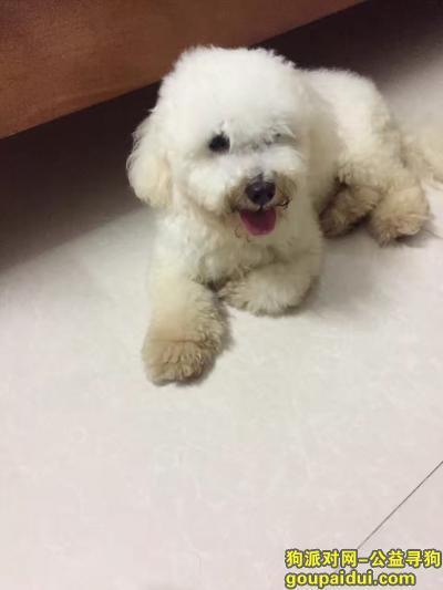 玉林寻狗启示,失踪半年了,我还没有放弃。,它是一只非常可爱的宠物狗狗,希望它早日回家,不要变成流浪狗。