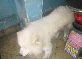 寻狗启示,057182609783  刚刚忘记发电话了,它是一只非常可爱的宠物狗狗,希望它早日回家,不要变成流浪狗。