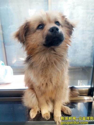 ,寻豆豆,它是一只非常可爱的宠物狗狗,希望它早日回家,不要变成流浪狗。