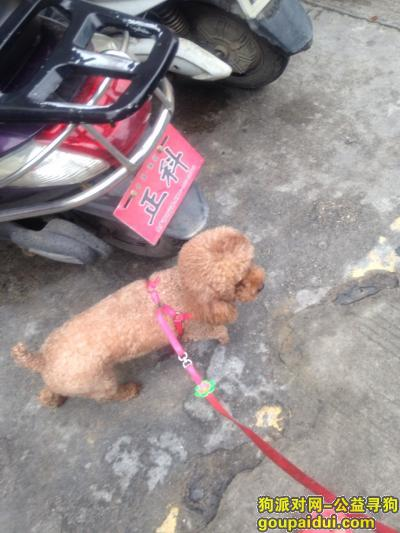 汕尾寻狗,陆丰东海寻找丢失的狗狗,它是一只非常可爱的宠物狗狗,希望它早日回家,不要变成流浪狗。