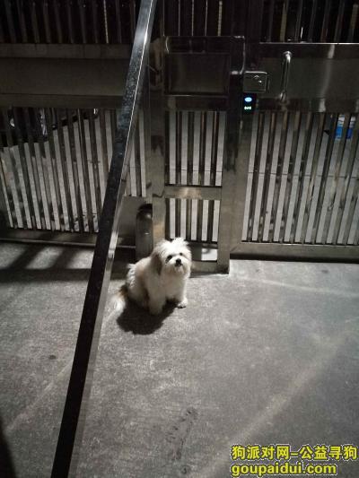 梅州寻狗启示,帮忙寻找我的狗狗,梅州西桥,它是一只非常可爱的宠物狗狗,希望它早日回家,不要变成流浪狗。