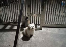 寻狗启示,帮忙寻找我的狗狗,梅州西桥,它是一只非常可爱的宠物狗狗,希望它早日回家,不要变成流浪狗。
