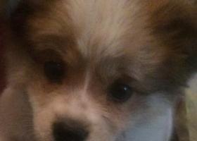 寻狗启示,寻狗启示,家里人很急,好心人帮忙转发一下谢谢,它是一只非常可爱的宠物狗狗,希望它早日回家,不要变成流浪狗。