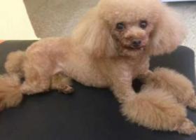 寻狗启示,找狗 重金酬谢5000元 联系电话15816781221,它是一只非常可爱的宠物狗狗,希望它早日回家,不要变成流浪狗。