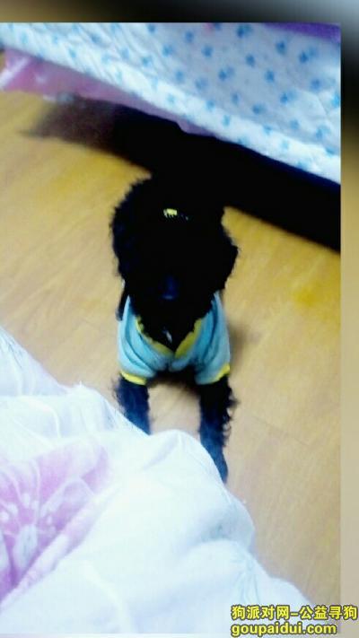 寻狗启示,重金寻狗。五月十五日下午在浙江宁波宁海双林生态旅游村丢失一只黑色公泰迪,它是一只非常可爱的宠物狗狗,希望它早日回家,不要变成流浪狗。