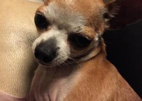 寻狗启示,蓬江区北郊附近!!!如图!,它是一只非常可爱的宠物狗狗,希望它早日回家,不要变成流浪狗。