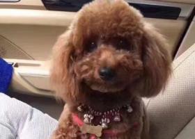 寻狗启示,寻找爱宠,有偿接力求助!,它是一只非常可爱的宠物狗狗,希望它早日回家,不要变成流浪狗。