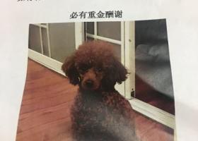 北京市朝阳区百子湾沿海赛洛城酬谢两千元寻找泰迪