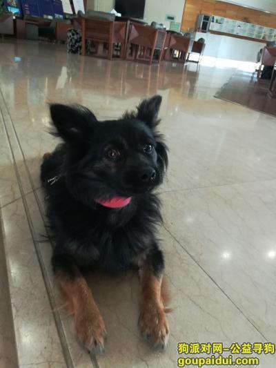 泉州捡到狗,在东海大街钟楼附近捡到的,它是一只非常可爱的宠物狗狗,希望它早日回家,不要变成流浪狗。