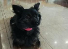 寻狗启示,在东海大街钟楼附近捡到的,它是一只非常可爱的宠物狗狗,希望它早日回家,不要变成流浪狗。