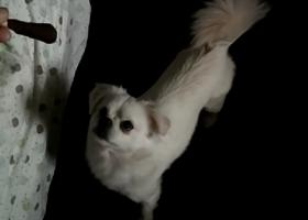 寻狗启示,南通如皋寻狗,重金酬谢,它是一只非常可爱的宠物狗狗,希望它早日回家,不要变成流浪狗。