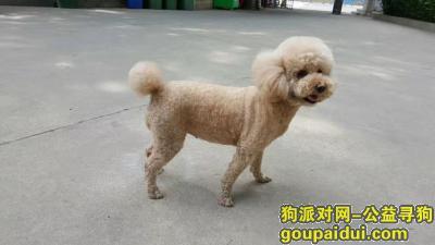寻狗启示,2017年5月26日在济南市市中区经七路恒丰银行附近丢失泰迪一只,重金酬谢提供信息者,它是一只非常可爱的宠物狗狗,希望它早日回家,不要变成流浪狗。