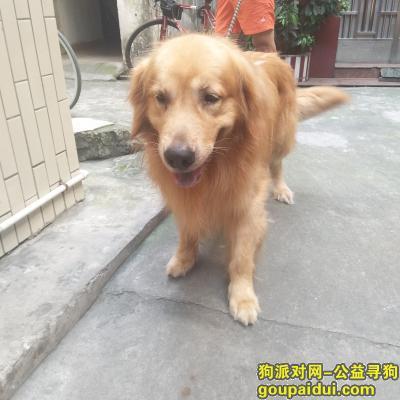 寻狗启示,5月26号在禅城区朗沙路捡到。,它是一只非常可爱的宠物狗狗,希望它早日回家,不要变成流浪狗。