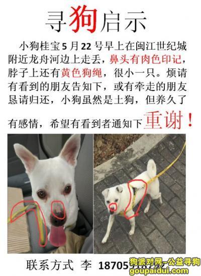 寻狗启示,福州仓山区盖山镇林浦路走失小狗,它是一只非常可爱的宠物狗狗,希望它早日回家,不要变成流浪狗。