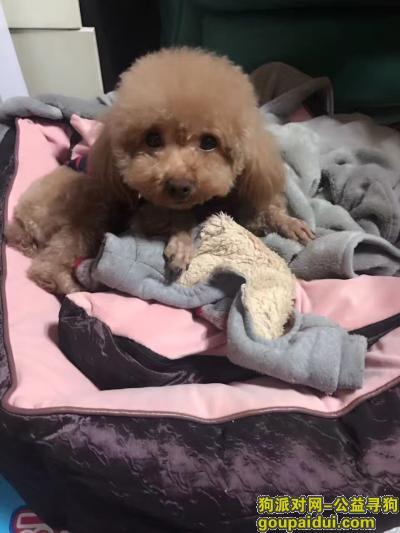莱芜丢狗,5月30号在莱芜高速服务区丢失,它是一只非常可爱的宠物狗狗,希望它早日回家,不要变成流浪狗。