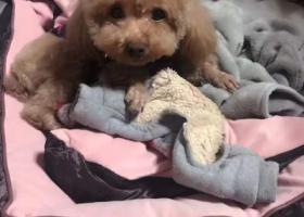 寻狗启示,5月30号在莱芜高速服务区丢失,它是一只非常可爱的宠物狗狗,希望它早日回家,不要变成流浪狗。
