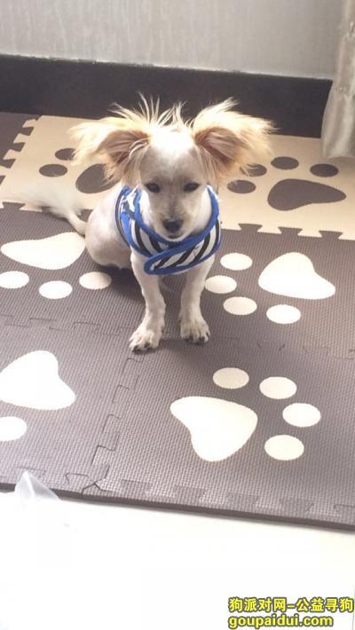 绍兴寻狗主人,捡到一只流浪狗 希望有爱心的认识领养,它是一只非常可爱的宠物狗狗,希望它早日回家,不要变成流浪狗。